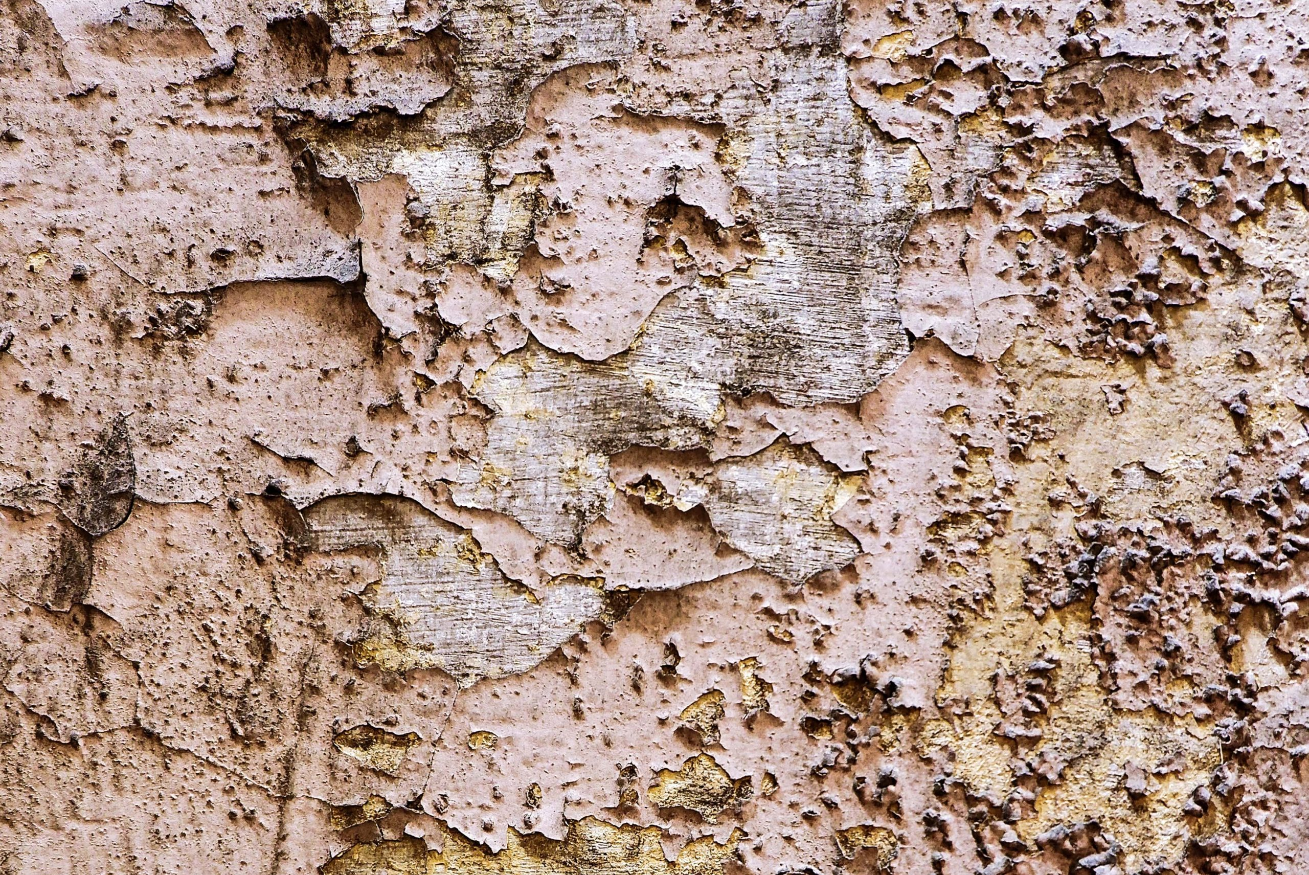 Termite Home Inspection